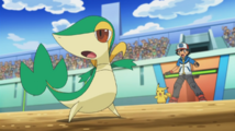 Ash and Snivy Don Battle