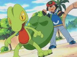 Ash's Treecko