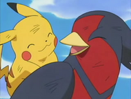 Swellow and Pikachu win the Tag Battle