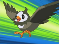 Ash's Starly