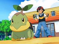 Ash's Turtwig