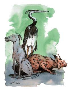 Animals5