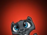 Niedliches Katzenbaby