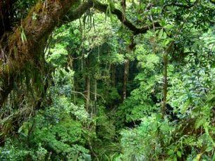 1624 Jungle