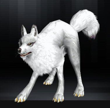 Wolf 14 1