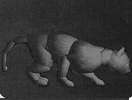 File:Black Cat.jpg