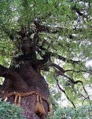 Treegodrope