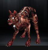Wolf 11 1