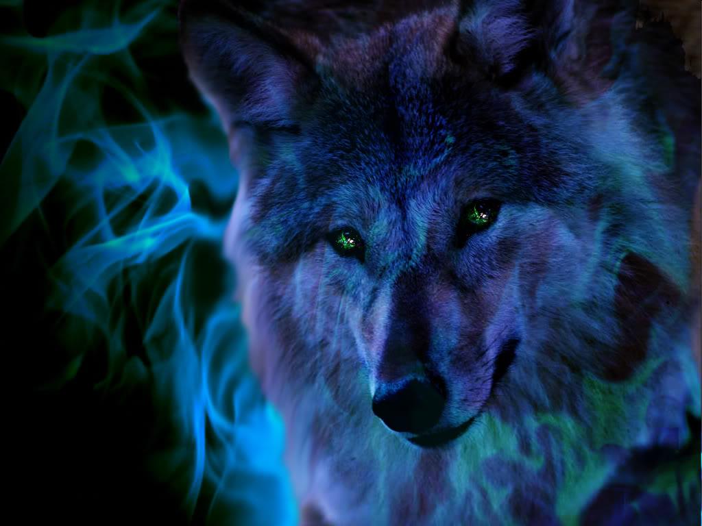 Image Fire Wolf Wallpaper yvt2jpg ShadowLand Online Wiki