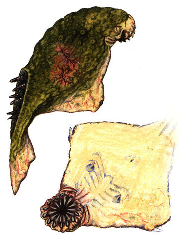 File:Dead fish.jpg