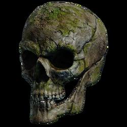 Нахмурившийся череп
