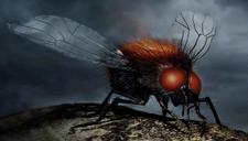 Моргайские мухи