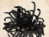 Black Chrysanthemum