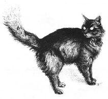 Critter Blackberry cat