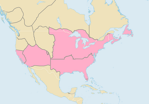 African-American Syndicates (North America)