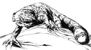 Critter Gila Demon