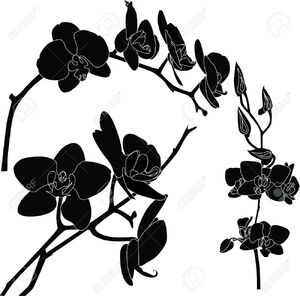 Black Orchid (Internet)