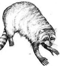 Critter Bandit