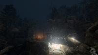 Hidden Forest View 01