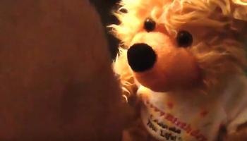 Birf Bear