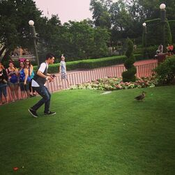 Roshon-fegan-looking-at-a-duck