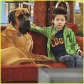 Davis-cleveland-dog-tv-watcher.jpg