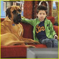 Davis-cleveland-dog-tv-watcher