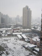 Snow-xuhui-kinggimped