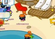 Собачкаалиса на пляже