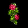 170x170 rose32