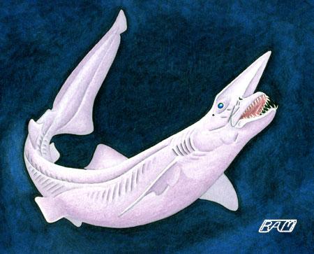 File:Goblin Shark.jpg
