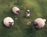 Sheepyard1