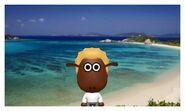 Shaun in Okinawa