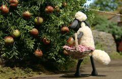 Shaun takes apples2