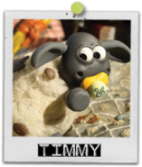 Timmy card