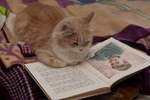 Cat got Dylan pic in a book 2011