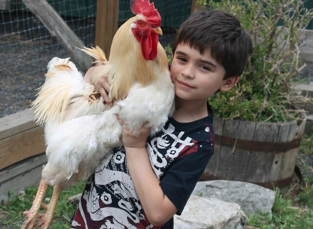File:Current jonah holding chicken.jpg