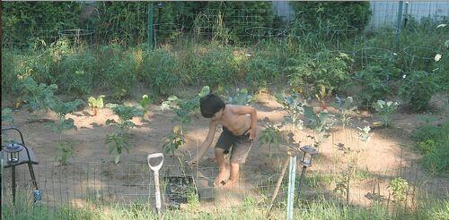 Current jonah nurturing his garden