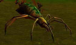 Forest Tarantula