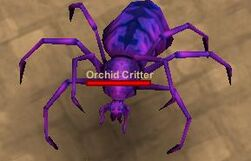 Orchid Critter