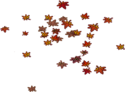 Fallen Red Leaves (3)