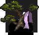 Black Pine of Hagoromo