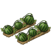 Watermelon Field