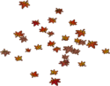 Fallen Red Leaves (4)