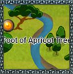 FootofApricotTree
