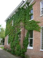 Waukegan 438 exterior north ivy