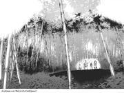 Él bosque de bambú de hierro
