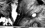 Los perros salvajes del bosque