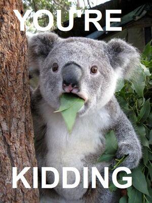 Surprised-Koala