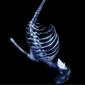 SkeletonTitan Avatar